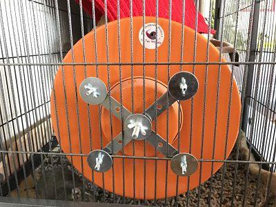 Anclaje de Tic Tac Wheels naranja