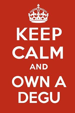 Keep calm and own a degu