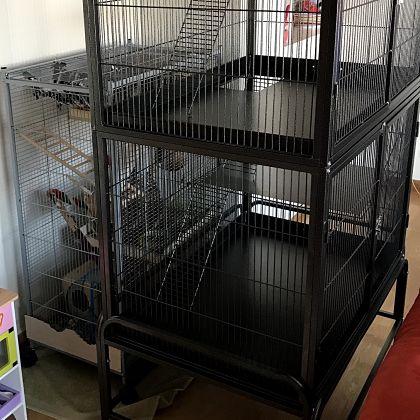 El degu mascota jaula